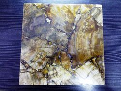 Natural Petrified Wood Jasper Gemstone Tiles And Slabs