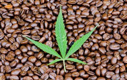 Coffeeweed Extract