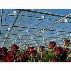 Cut Red Rose Flower