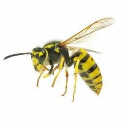 Wasps Control Service