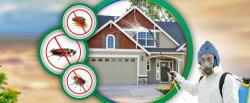 Household Pest Control Service, in NCR