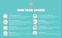 Cute Seal - Canadian Premium Baby Diapers - Medium - 52pcs (Velcro Type)