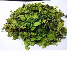 Moringa Leaves - Sahijan - Saragva Pan - Sahajana