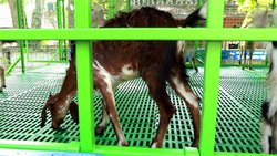 Steel Frame Structures Commercial Projects Goat Farming Construction