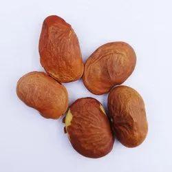 Pongamia Pinnata Seed