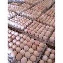 肉用仔鸡孵化蛋清,棕色特大蛋