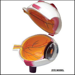Eye Model (Teaching Device)
