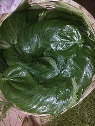 Betel Leaves Bangla Paan