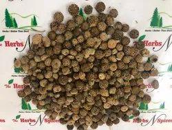 Akarkara Seeds - Anacyclus Pyrethrum Seeds