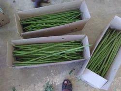 Drumstick Vegetable in Karur - Latest Price & Mandi Rates