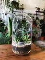Big Glass Capsule Terrarium