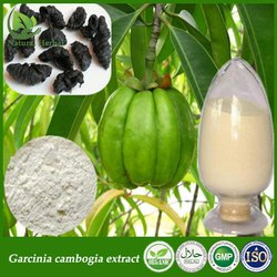 70% Hca Garcinia Cambogia Extract