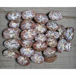 Half Betel Nut