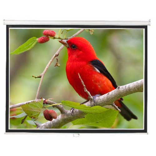 Image result for 16:9 Motorized Projector Screen