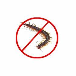 Centipede Control Service