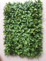 Vertical Green Wall Hedge