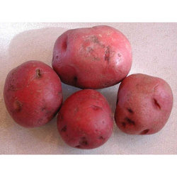 Lady Rosetta Potatoes