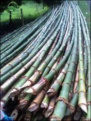 Mooli and Gatee 30 International quality Bamboo From Bengal, Tripura, Manipur and North East India .Bulk order now.
