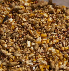 Poultry Feed in Kolkata, West Bengal | Get Latest Price from