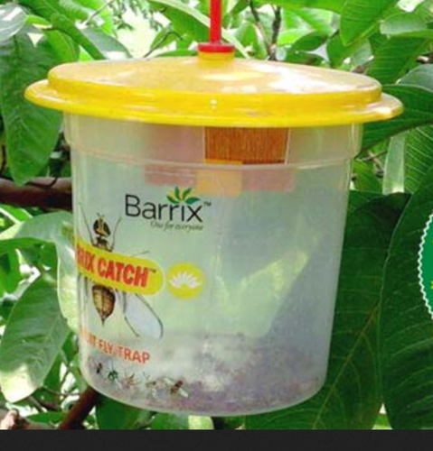 Catch Vegetable & Fruit Fly Trap
