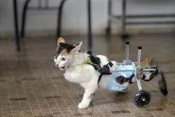 Cat  Prosthesis