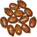 Natural Dried Hybrid Castor Seeds, Pack Size: 100 Kg, Packaging Type: Pp Bag
