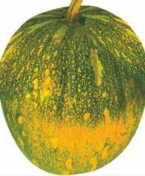 5592 Hybrid Pumpkin Seeds