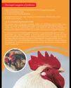 Poultry Premix
