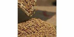 Karuvachi Seed