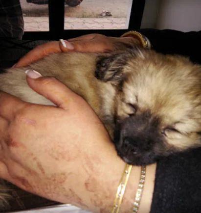 Healing Paws Veterinary Clinic, Amritsar - Nursing Homes