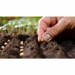 Peltraform Seeds