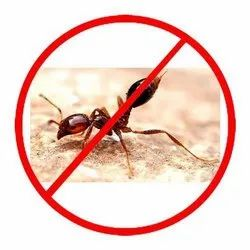 in Home Bee Red Ants Pest Control Service, in Delhi