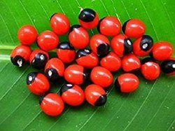 KarmaYog Herbal Natural Chanothi Seed