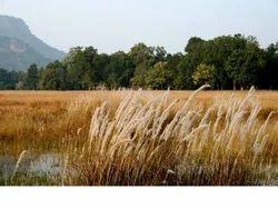 Bandhavgarh National Park Services