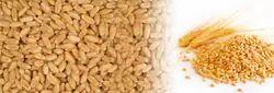 Brown Sabari Whole Wheat, High in Protein