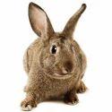 Rabbit Breeder Feed
