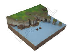Sea Action B For For Land From Model