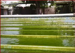 Industrial Wastewater Treatment Technology- Biological