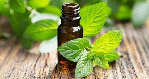 Tea Tree Extract Liquid at Rs 2600/litre | Tea Tree Oil | ID: 18531176648