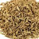 Large Cumin Seeds