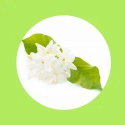 MILOMA pastel green Jasmine Scented Candles (Mini Glass Jar)