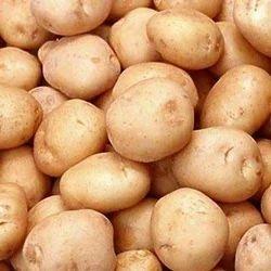 50 kg Lokar & Locker Potato, Packaging: Jute Bag