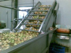 Guava Processing Line