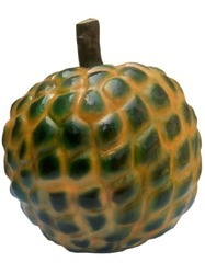 Educational Model-Custard Apple