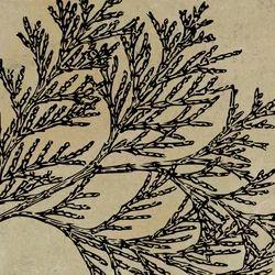 Fossil Design Sandstone