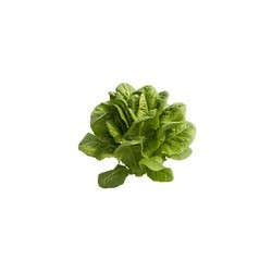 Cos Lettuce Seeds