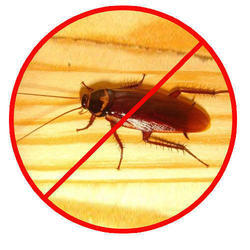 Residential & Commercial Household Pest Control(Gel Or spray Depends)