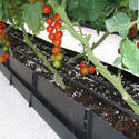 Soilless Growing Trough