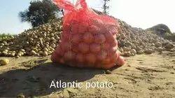 Brown A Grade Atlantic Potato (Bulk Supply Only), Packaging Size: 40 Kg