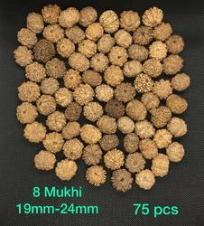 8 Mukhi - 13 Mukhi Mix Lot